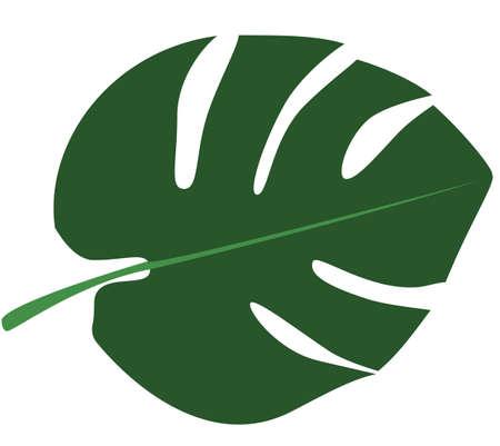 Vector illustration leaf of a palm.