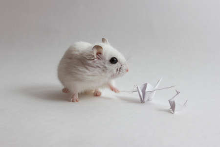 tonalit�: hamster et origami