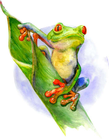 Green frog with red eyes and fingers sitting on the green leaf. Watercolor illustration isolated on white background.