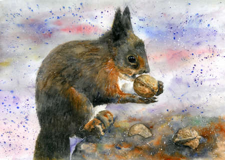 Brown and red squirrel eating a walnut. Watercolor illustration.