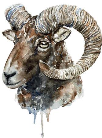 Altai argali watercolor illustration isolated on white background, Ovis ammon ammon. Фото со стока
