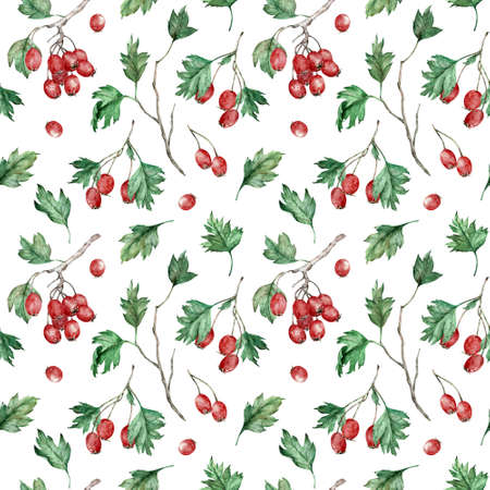 Watercolor seamless pattern of hawberry shrub. Autumn berry forest concept. Hawthorn background. 写真素材