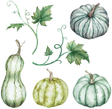 Watercolor clipart of colorful pumpkins - green and blue with leaves. Thanksgiving collection of pumpkin harvest isolated on white background. Autumn set. Hand-drawn illustration of pumpkins of different colors.