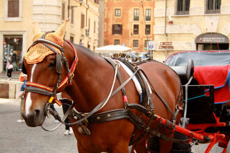 A brown walking horse in the centre of Rome. Sightseeing horse-drawn vehicle. Horse for walks and excursions of tourists. Banco de Imagens