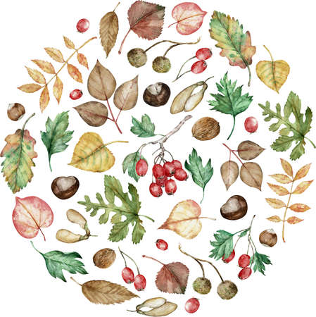 Watercolor autumn set of hazel-nuts, chestnut, maple seeds, planetree seed pods, oak, birch, poplar, and ash leaves.