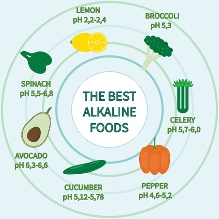 alkaline: List of Alkaline Foods . Alkaline foods are foods that raise the the amount of oxygen that your blood takes in.