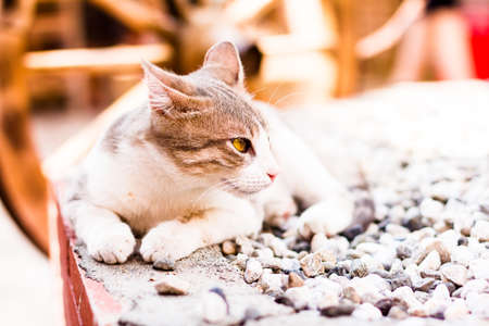 White and gray striped cat lying on the stones, selective focus. Relax mood. Cat portrait.