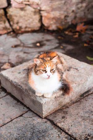 Istanbul red cat, selective focus. Closeup portrait of the cat. Homeless cat sitting on the stone, selective focus. Outdoor photography.