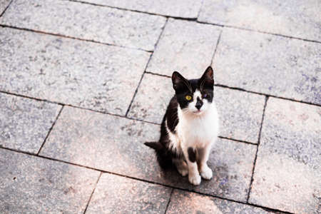 Istanbul white and gray cat, selective focus. Closeup portrait of the cat. Outdoor photography.