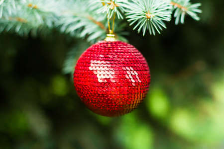 Red ball decoration hanging on a christmas tree, selective focus. Christmas postcard. Holiday concept.