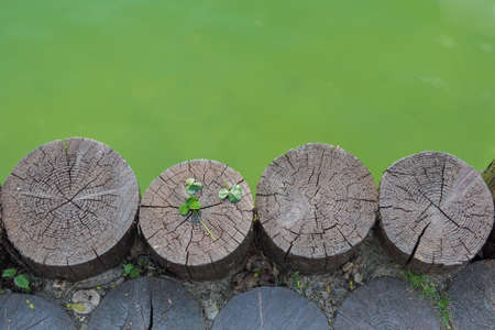 three leaf clover: Next to waterbody located the four logs.There are three leaf clover on one of logs