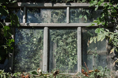 godforsaken: An old window frame with the glass, stands on the ground in the garden among plants. The plants also grow behind the glass of the window
