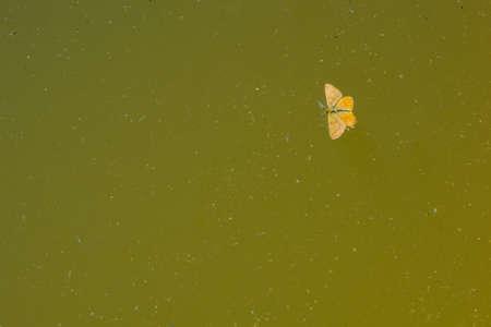 fragility: Bright orange butterfly  Stock Photo