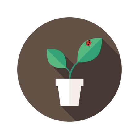 lady bug: Illustration der Topf mit Bl�ttern und Marienk�fer Flach Symbol Illustration