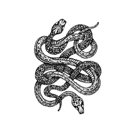 Dotwork due serpenti. Illustrazione vettoriale di design t-shirt. Schizzo disegnato a mano del tatuaggio.