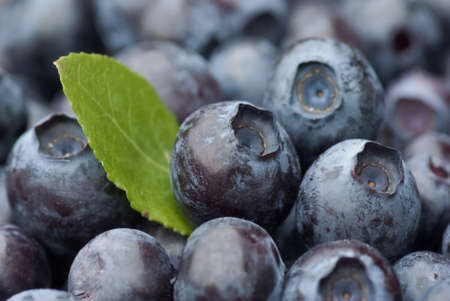the blueberry: Closeup of fresh blueberries with green leaf.
