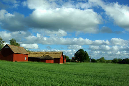 Landscape with red barns and a green field of corn  photo