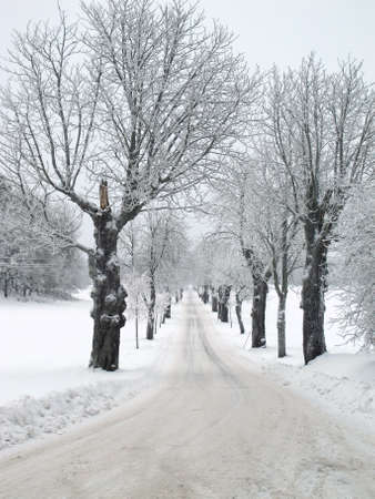 Snowy winter landscape with country road a gloomy day.                                photo