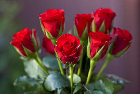 Bouquet of fresh red roses. photo
