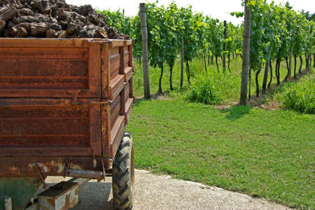 Loaded wagon on vineyard  photo