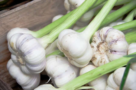 Harvest of fresh garlic for sail on farmers market. photo