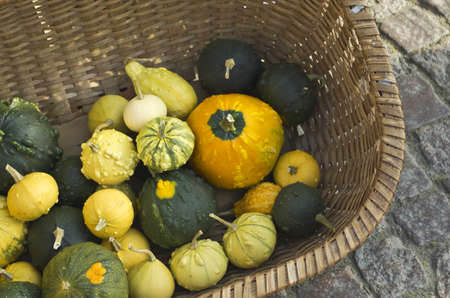 Pumpkin and gourds in weaved basket in fall. photo
