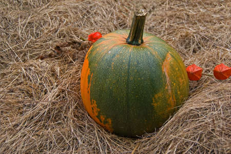 eatable: Great eatable pumpkin on straw.