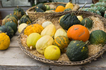 Pumpkins and gourds for sale in fall. photo