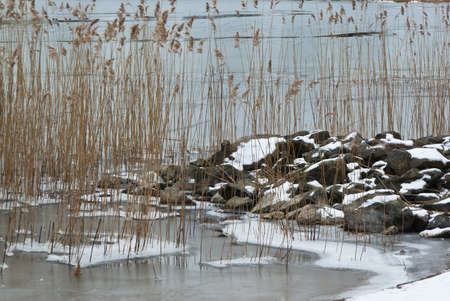 brackish water: Stones and reeds in icy water at the seashore. Stock Photo