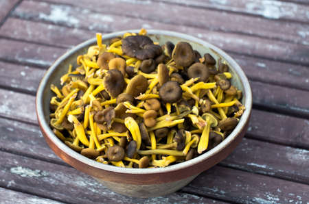 Bowl with newly picked funnel chanterelles in fall. photo