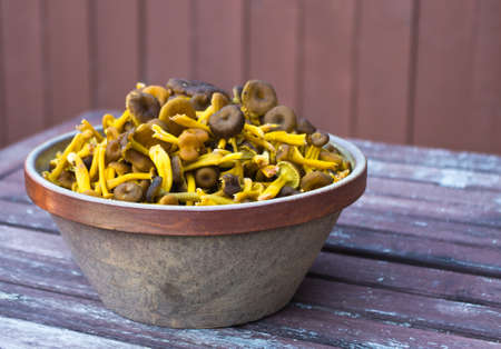 mushroom picking: Stoneware bowl with fresh picked funnel chanterelles in fall