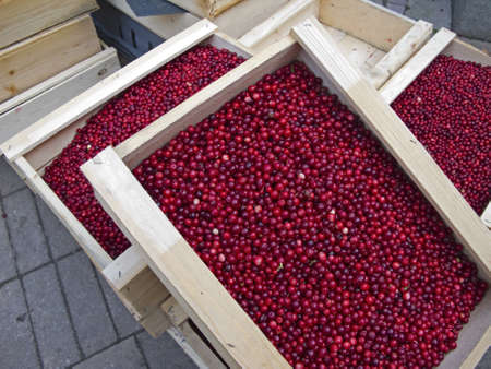 Wooden box with fresh lingonberries for sale at farmers market. photo