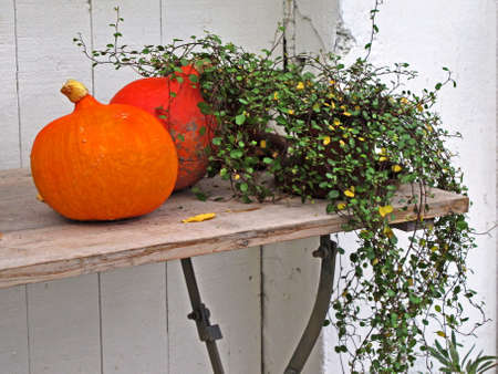 Small pumpkins for food and decoration at fall    Stock Photo