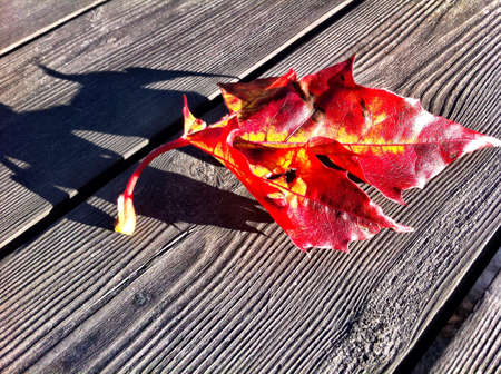 red maple leaf: Red maple leaf on wooden bench in fall