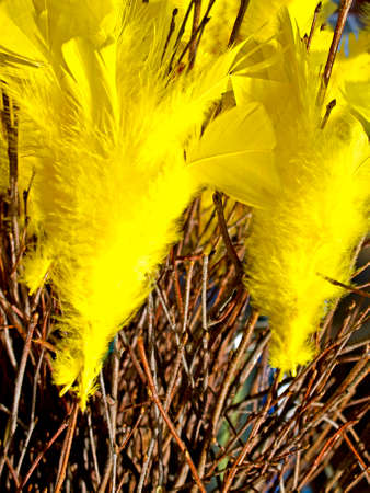 Birch twigs with yellow feathers for decoration  photo