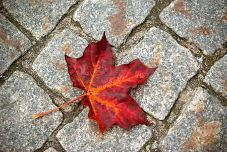 red maple leaf: One red maple leaf on cobble stone ground in fall