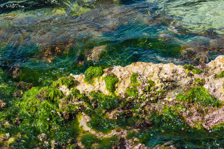 sea grass: Stony beach with sea grass and flowing water.