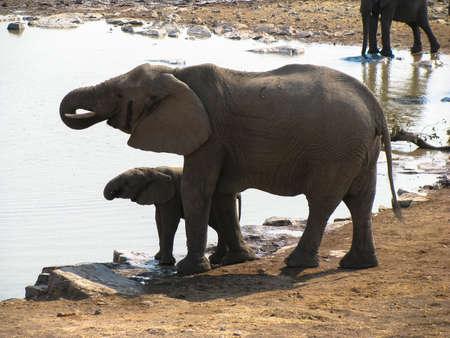 Elephants Etosha National park mum and baby Standard-Bild