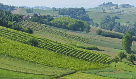 vineyard hills view Standard-Bild