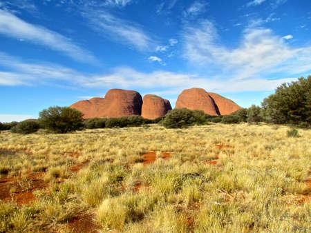 Olgas Australia Outback trees and bushes Standard-Bild