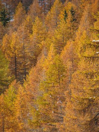 Mountains autumn trees landscape Standard-Bild
