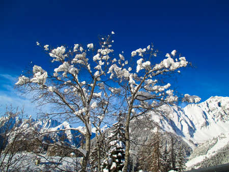 Mountains of snow covered trees