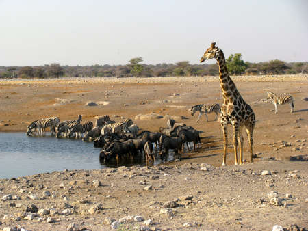 Namibia animals drinking
