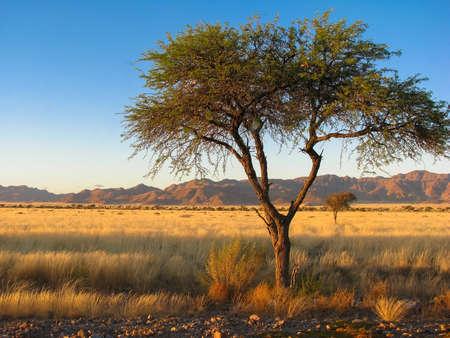 Namibia Namib mountains and tree Standard-Bild
