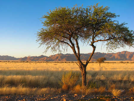 namib: Namibia Namib mountains and tree Stock Photo