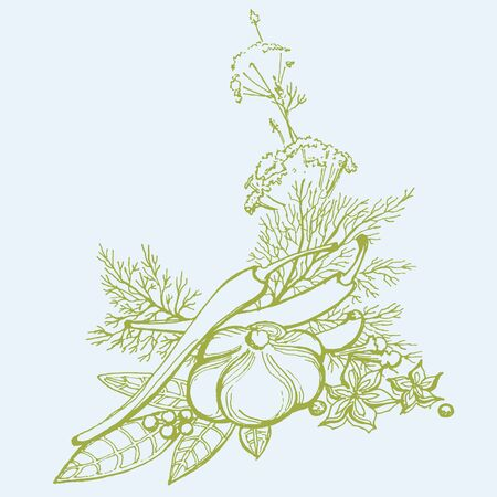 cloves: sketch set -garlic, parsley, anise, spices, pepper, dill, parsley, rosemary, red pepperanise, cloves