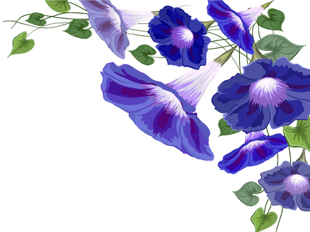 Flowers bells, convolvulus, ivy painted white background with bright blue petals and green leaves asymmetric composition vector