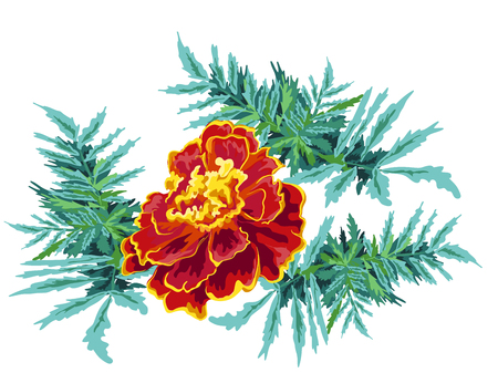 vector illustration of a marigold flower and leaves bright festive for congratulations on a white background Illustration