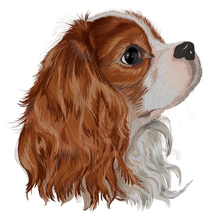 현실적으로 벡터 무심코 킹 찰스 발 바리, 사랑스럽고 헌신적 인 품종의 품종의 강아지를 그린, 선조 손 작업의 밝은 그림