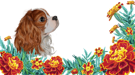 Realistically painted in vector head Cavalier King Charles spaniel dog framed by marigold garden flowers and leaves invitation card isolated on white background Illustration